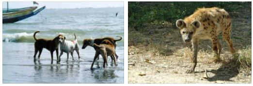 Gambia Animals